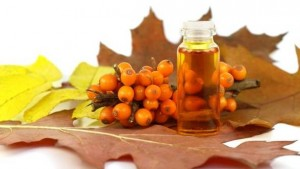 Sea buckthorn-11